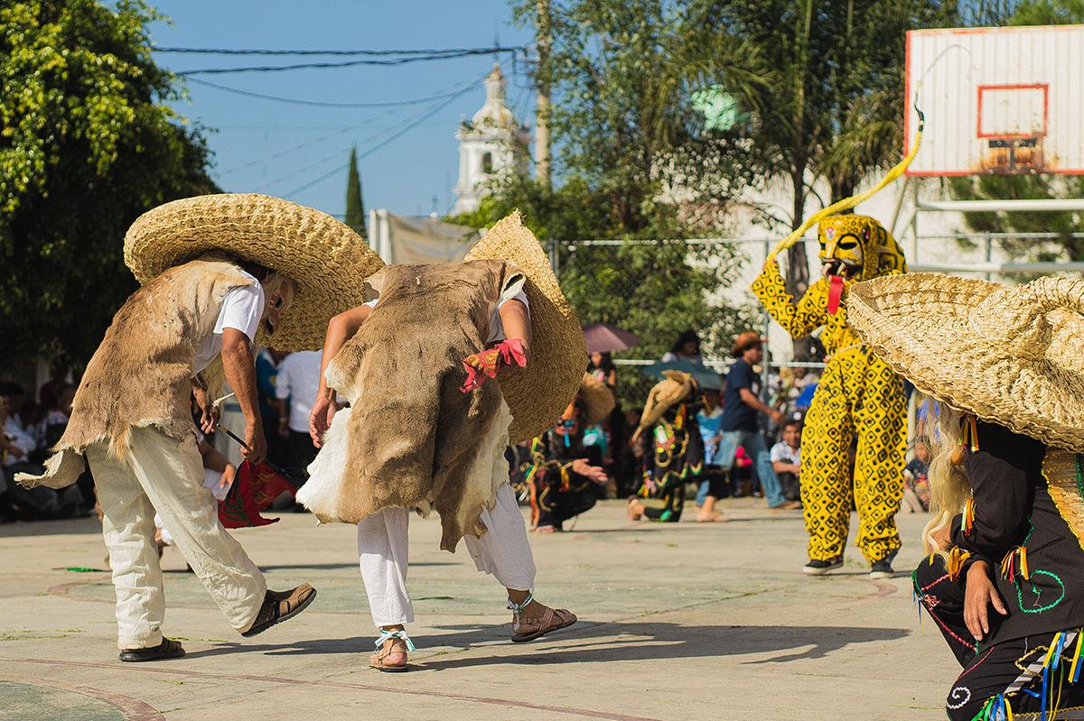 Los tecuanes hacen de las suyas
